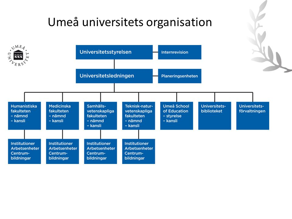 Umeå universitets organisation