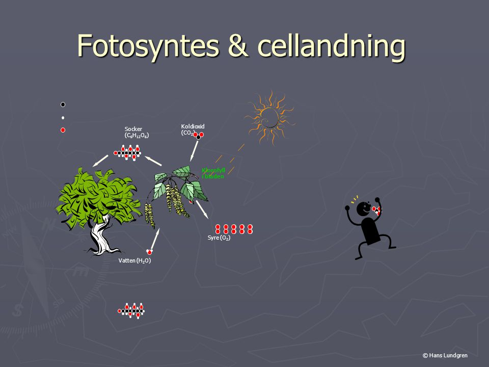 Fotosyntes & cellandning