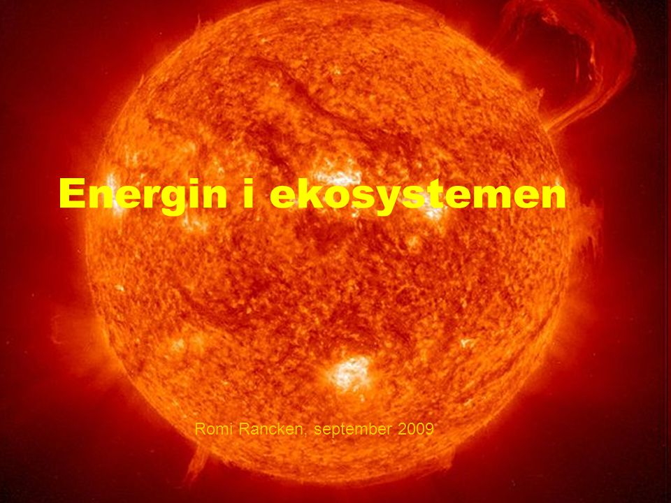 Energin i ekosystemen Romi Rancken, september 2009
