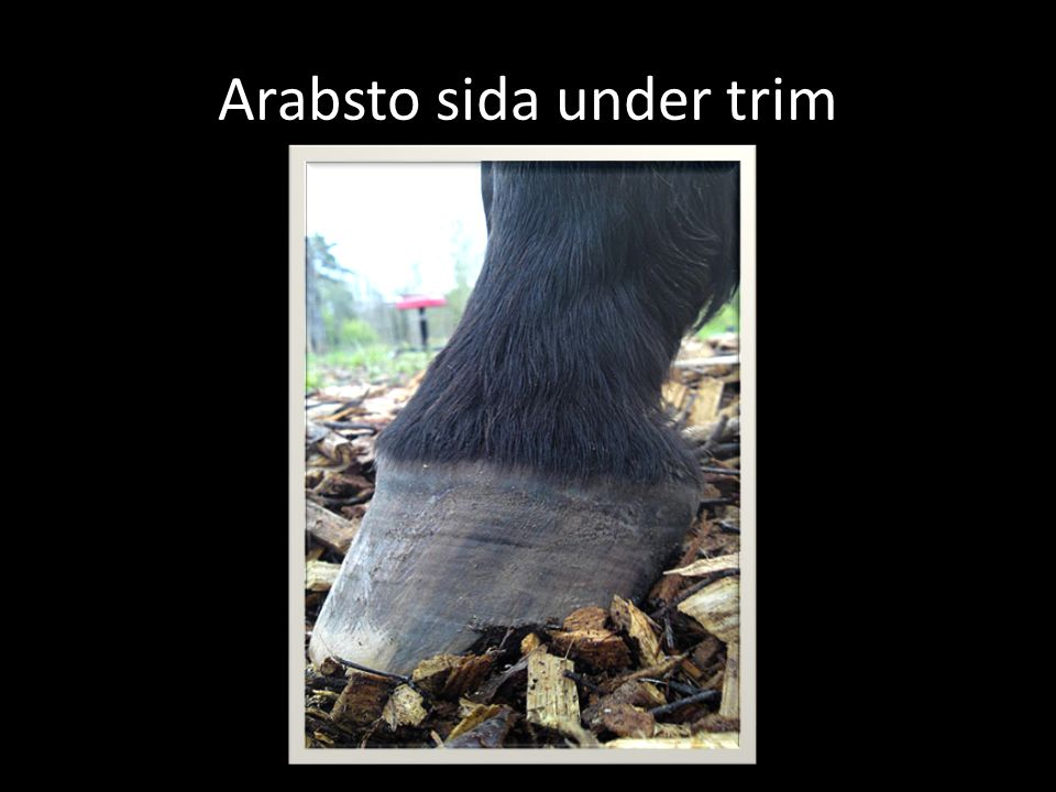 Arabsto sida under trim