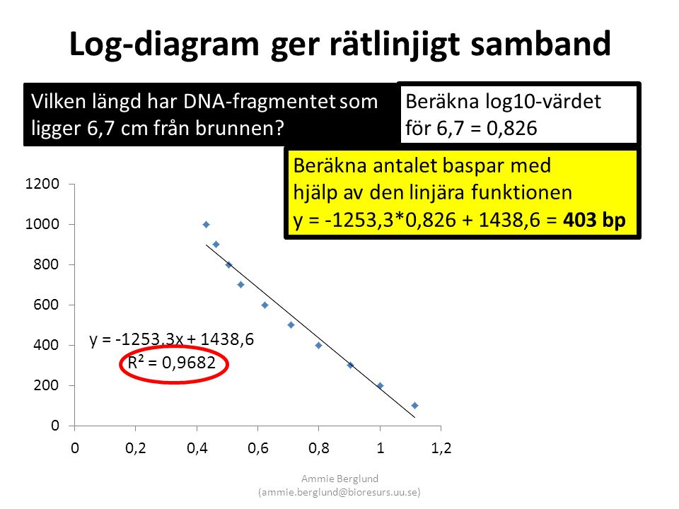 Log-diagram ger rätlinjigt samband