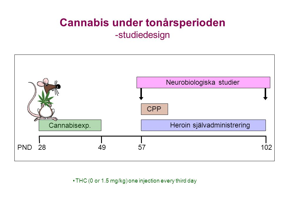 Cannabis under tonårsperioden