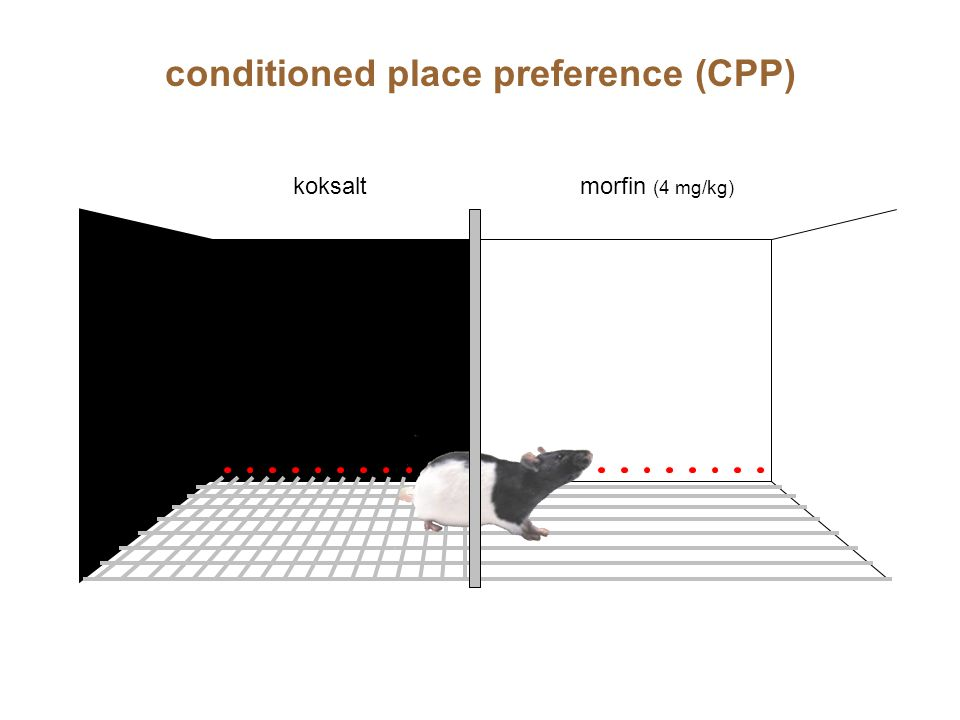 conditioned place preference (CPP)