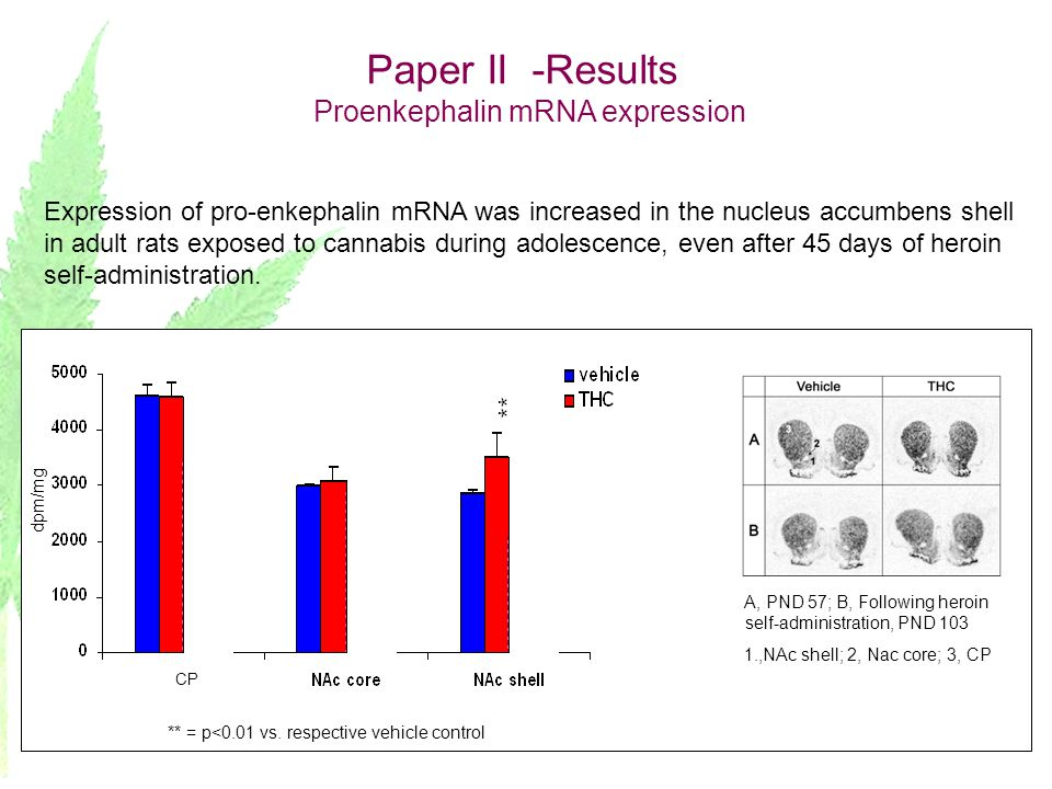 Paper II -Results Proenkephalin mRNA expression