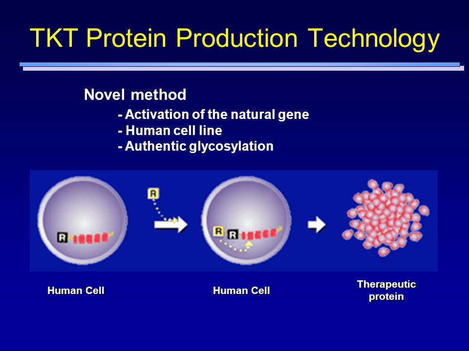 TKT Protein Production Technology
