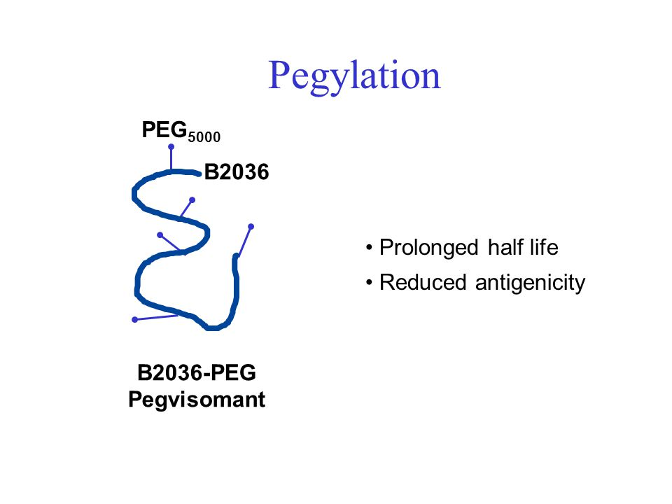 Pegylation PEG5000 B2036 Prolonged half life Reduced antigenicity
