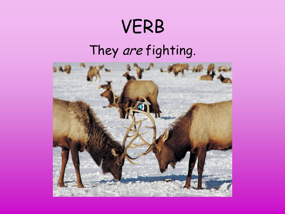 VERB They are fighting.