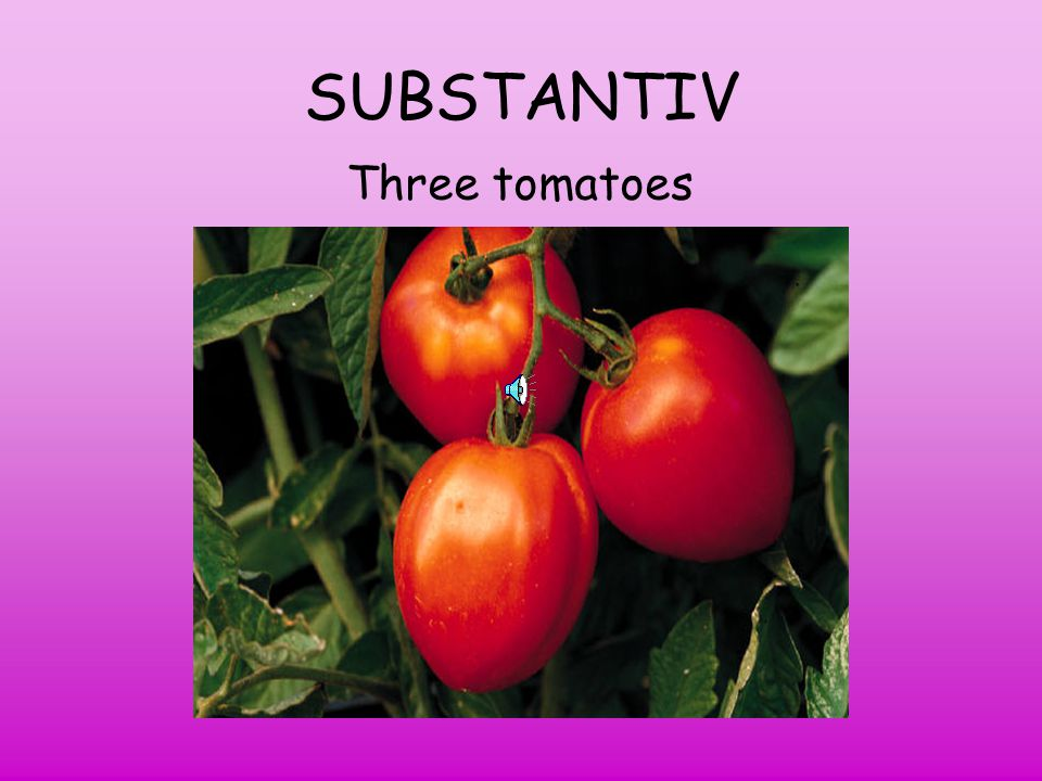 SUBSTANTIV Three tomatoes