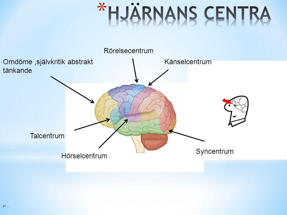 syncentrum i hjärnan
