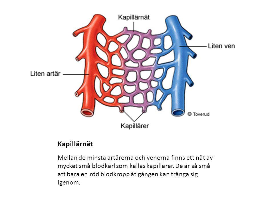 vad gör kapillärer