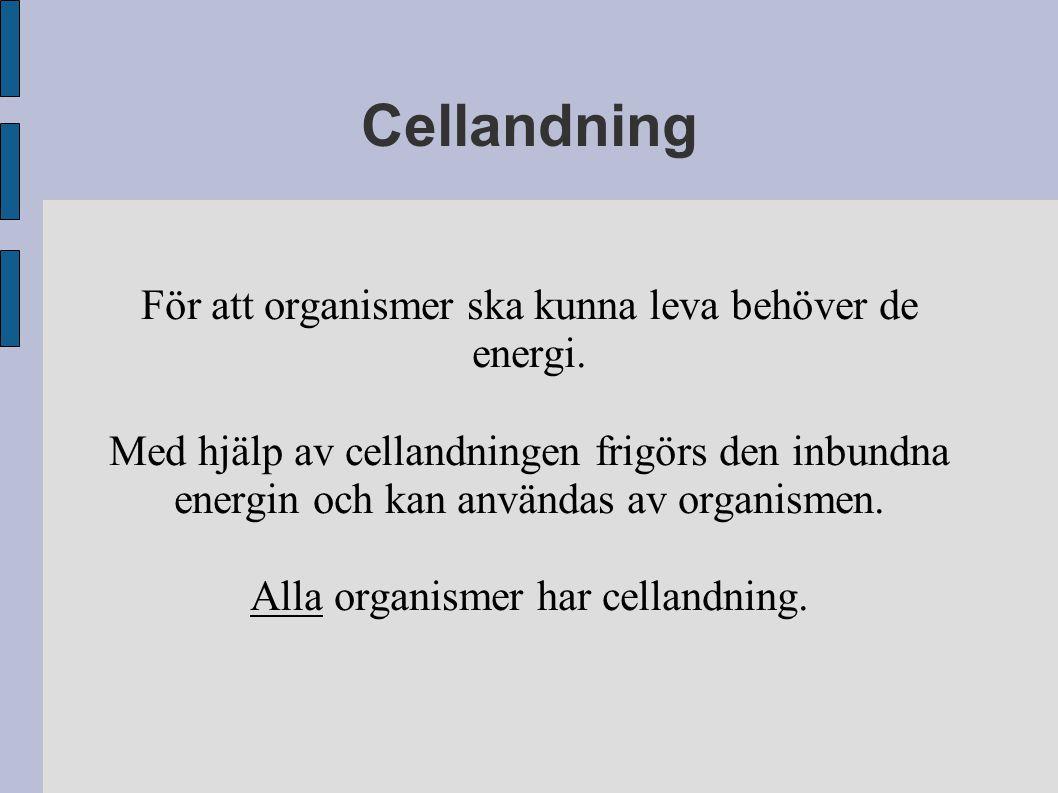 vad innebär cellandning